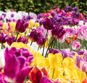 mothers day flowers - fall bulbs
