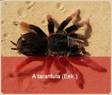 valentines day worst gift a tarantula