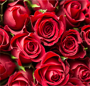 valentines day todo give flowers