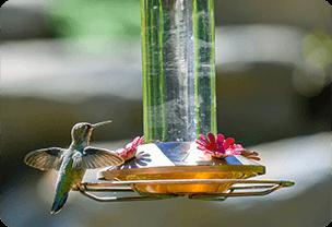 Wedding gift idea for father - bird feeder